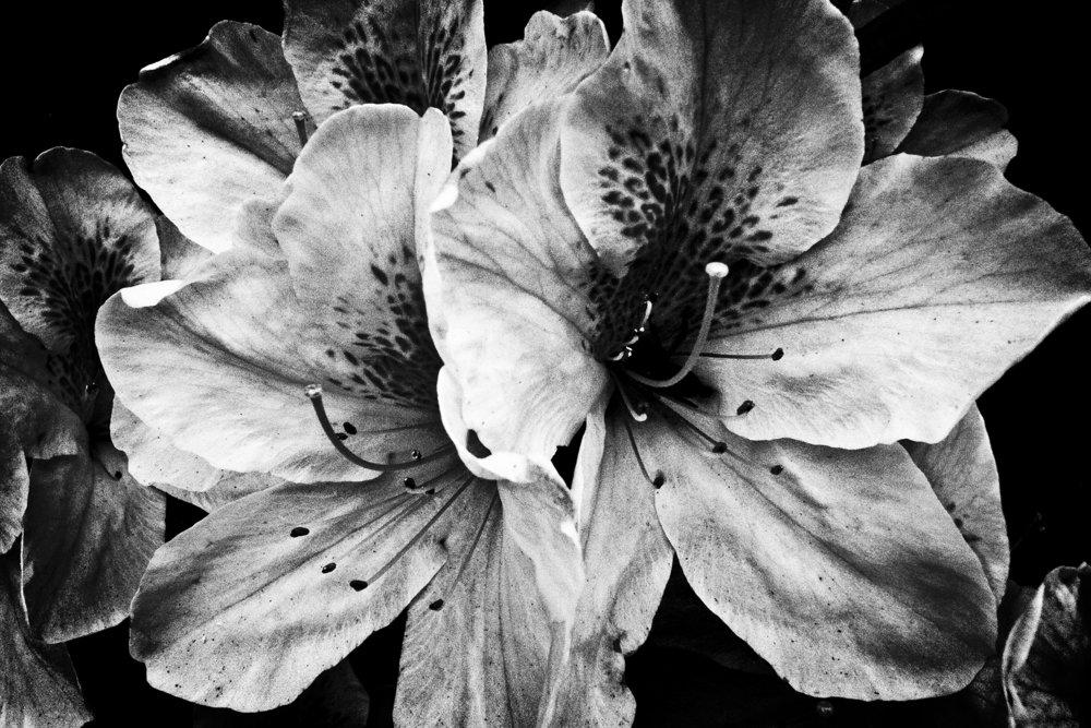 R0011408_Blue Lotus.jpg