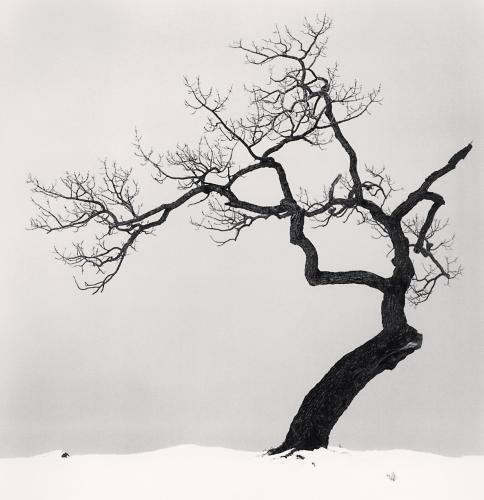 Kussharo Lake Tree, Study 1, Kotan, Hokkaido, Japan. 2002.jpg