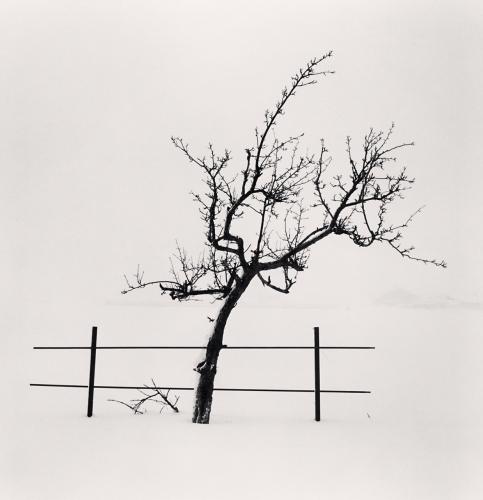Tree and Fence, Nakafurano, Hokkaido, Japan. 2012.jpg