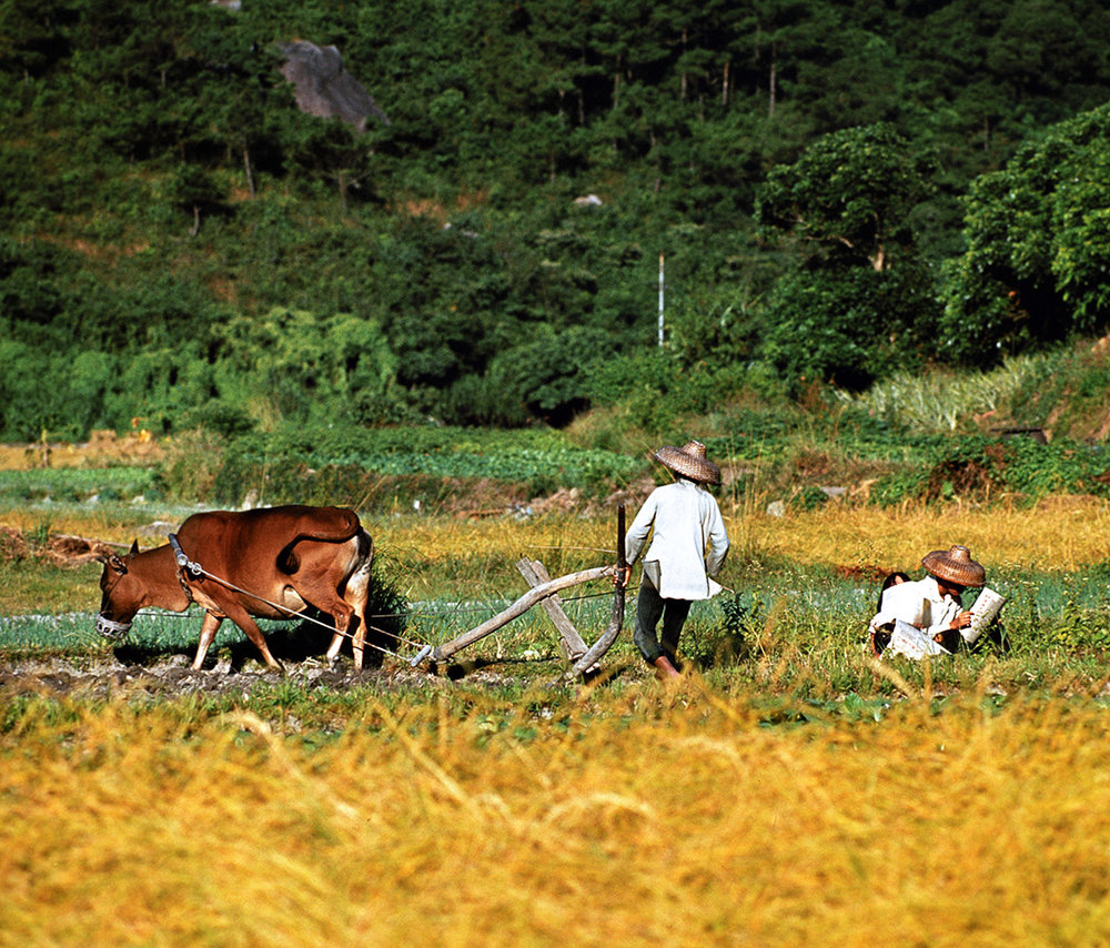 Lantau Farmers, 1978