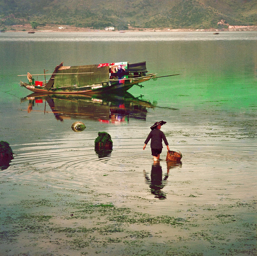 Collecting Seaweed at Tai Po, 1973