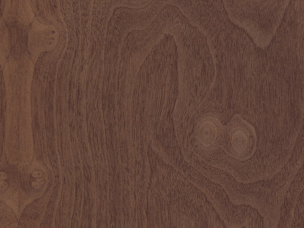 WALNUT BURL    -    Download Swatch