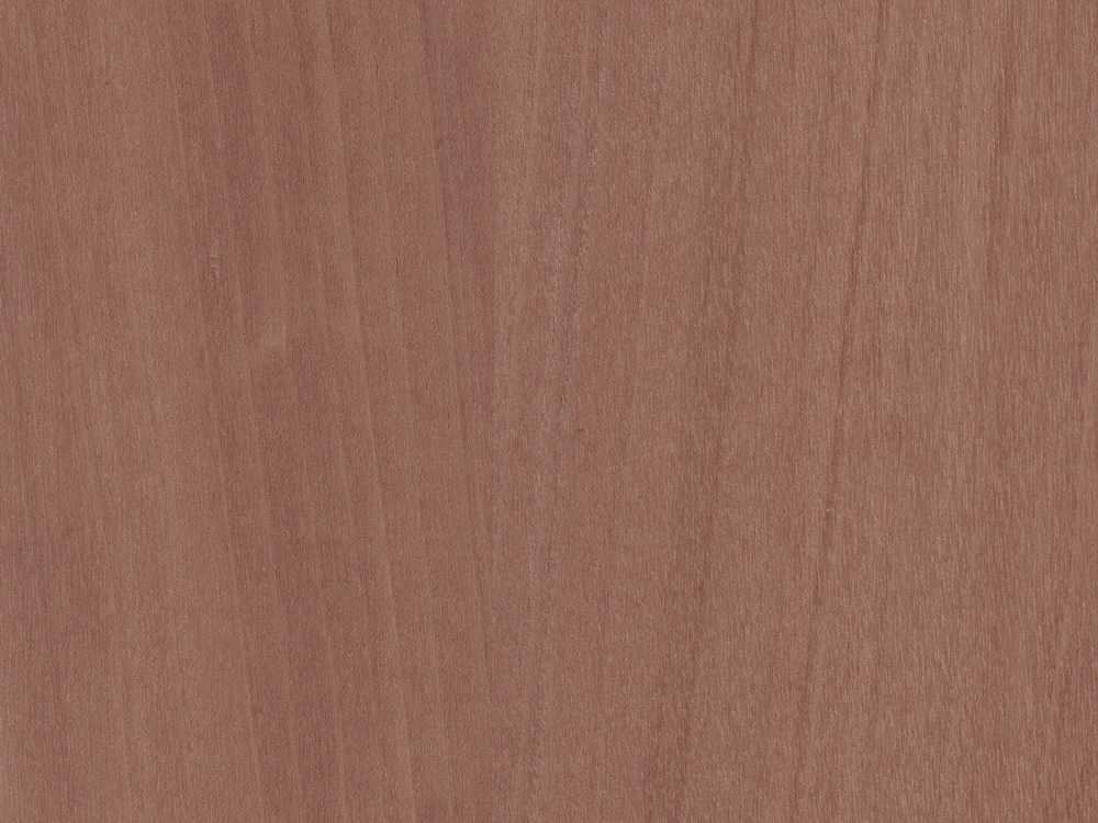 WALNUT EUROPEAN    -    Download Swatch