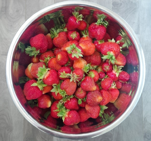 Four quarts of luscious strawberries.