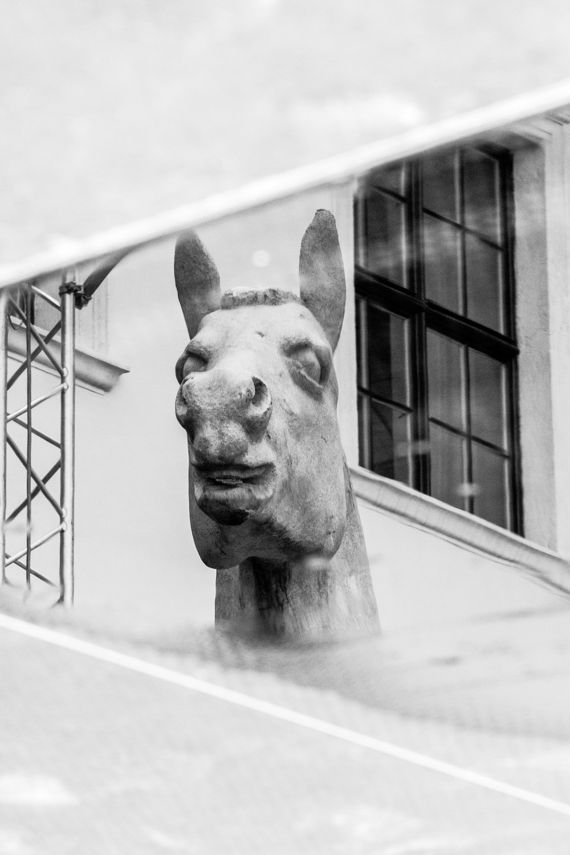konj refleksija okrenut.jpg