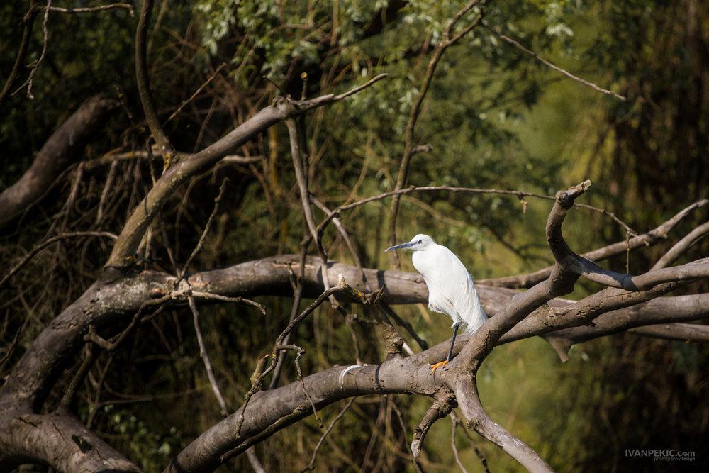 ptica ivanovo suma priroda.jpg