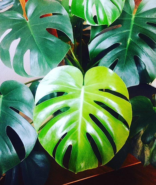 🦎🌱💚🔫👒 #plantsofinstagram
