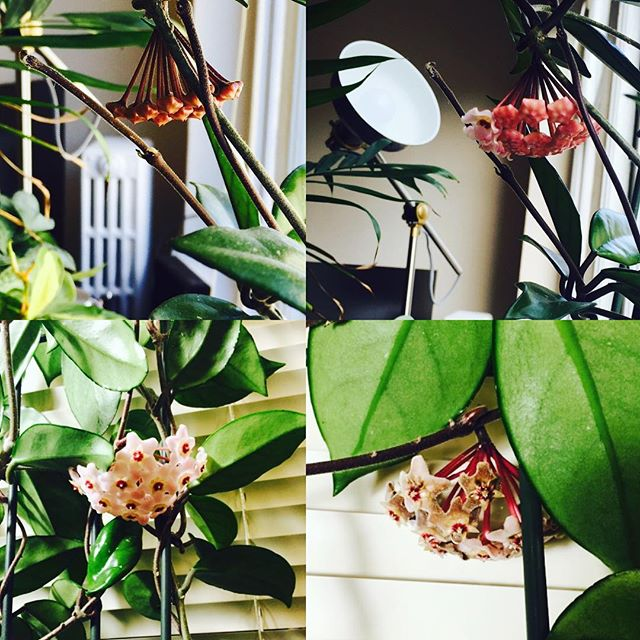 Breaking my months of silence with pictures of our crazy plant. This is its life cycle 🌱🌿🌸♻️🤓 #plantgoals