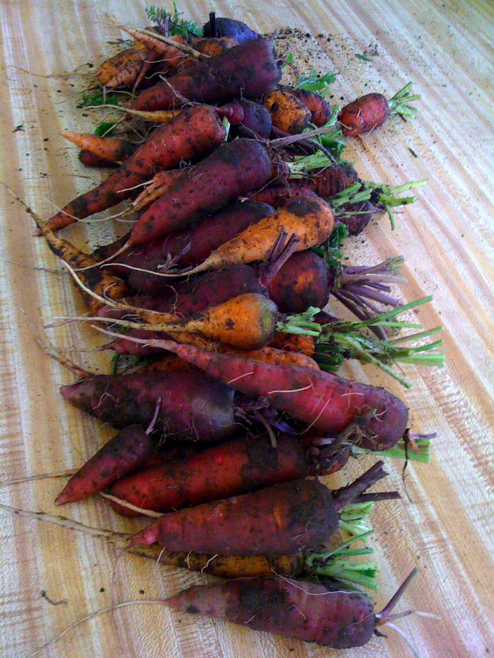 atomic red and cosmic purple carrots