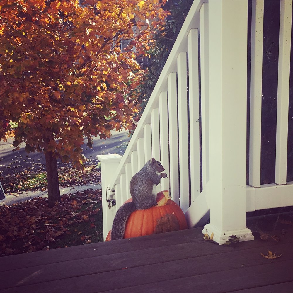 Instagram Message: Taken from my front door. Another Hallmark moment. Check the blog if you've ever gotten angry on Facebook.