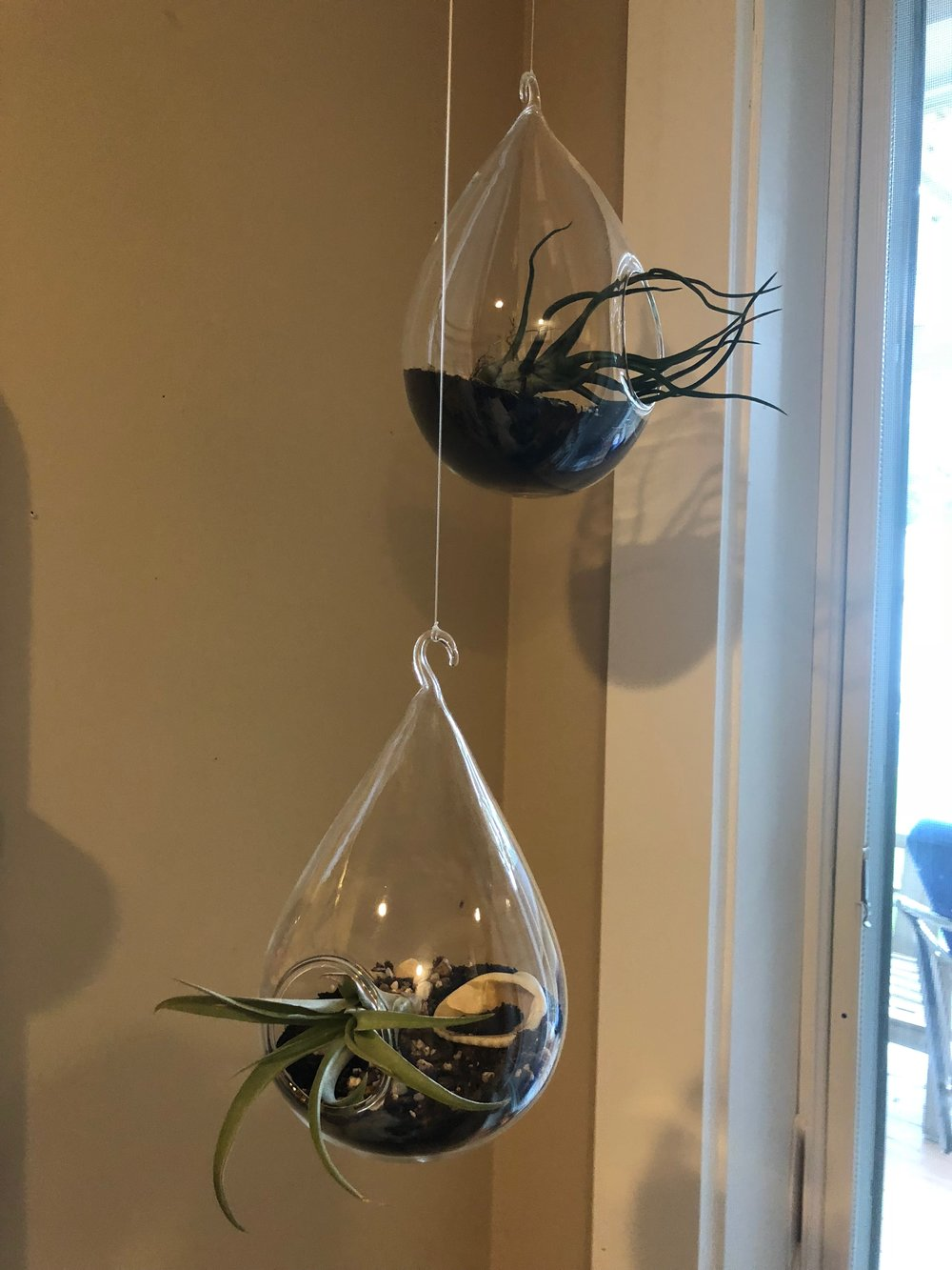 These plants hang in my office. Black sand and shells from my travels make them cool. I bought these plant holders from  Spruce  about 5 years ago and just change out the air plants if they don't make it.
