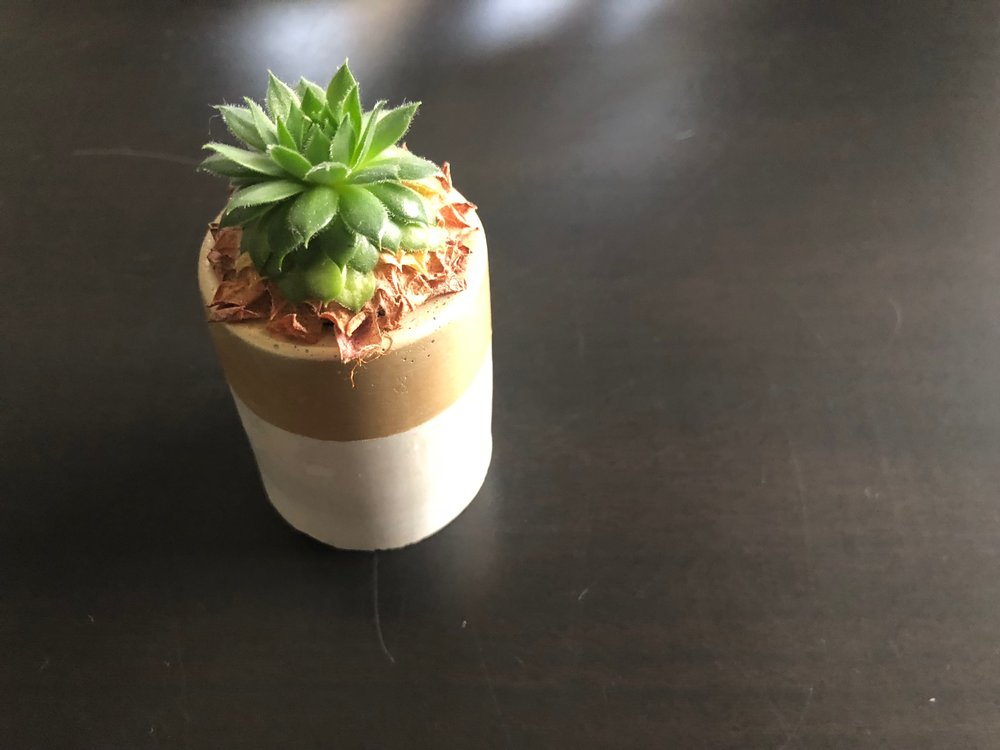 The size of a shot glass, this succulent can make any space sweet. It was meant to be a  pinch  for someone and I kept it. Rarely do I do that but it was just the right amount of glam and green for a space that needed it.