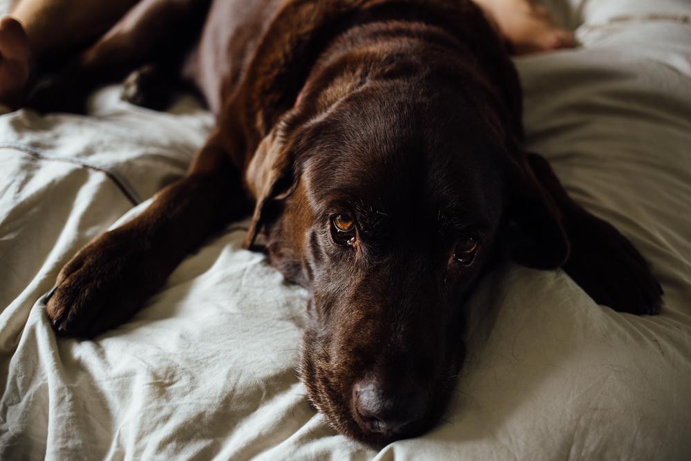 dogwoodphotography_photographer_vancouver_newborn_baby_bryce-14.jpg