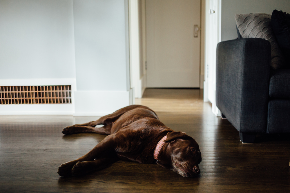 dogwoodphotography_photographer_vancouver_newborn_baby_bryce-30.jpg