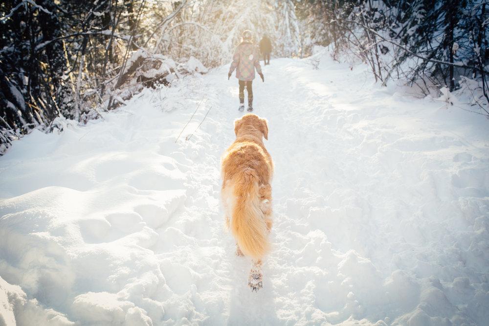 dogwoodphotography_westkootenay_photographer_family_rossland_fosterfamily-72.jpg