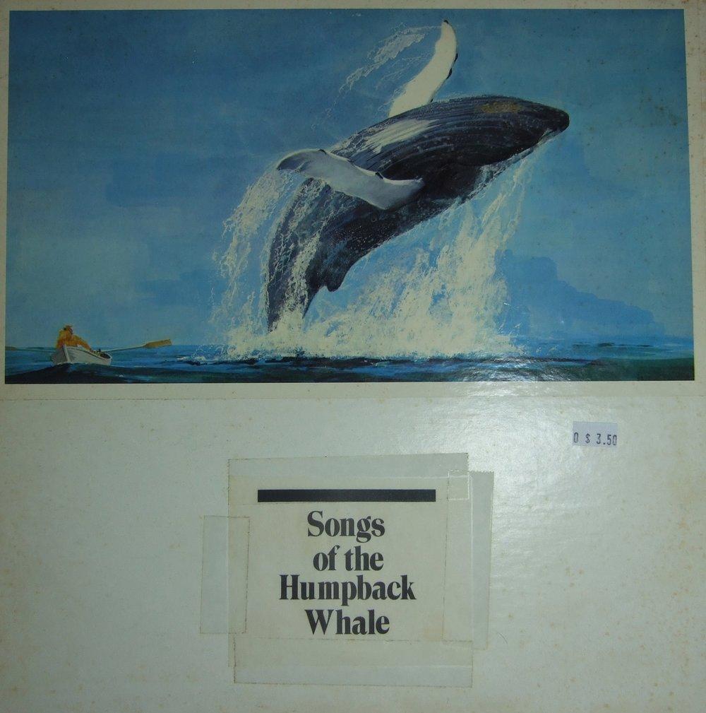 humpback+whale.jpg