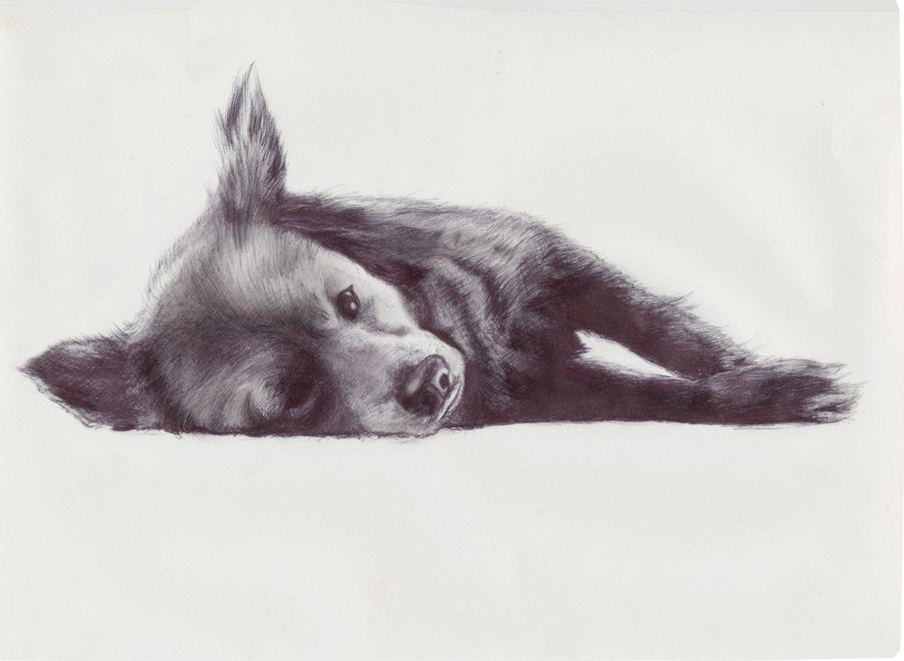 Puppy4.jpg