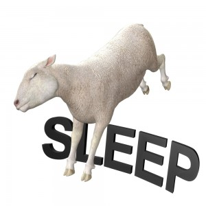 insomnia_sheep