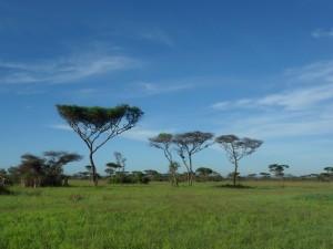 trees, goals, life
