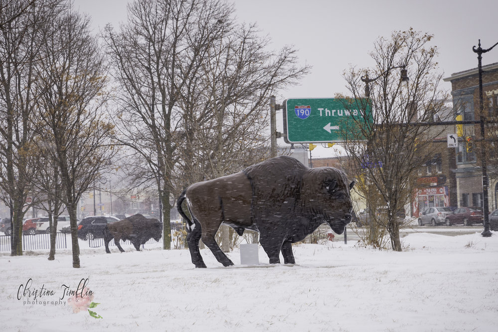 Happy Hump Day! Today is a rather simple photo, it's a bison on Niagara St. by the 190. But the history here is pretty cool. These bisons are made of fiberglass and the original bisons, appearing back in 2000, were part of a Roswell Park and Burchfield-Penney Art Center collaboration. The bisons were made and handed out to various Buffalo artists to decorate, were placed on display around Buffalo, and eventually auctioned off to benefit Roswell. These days you can see the Buffalo roaming on thruways, businesses, city streets, etc.  Interestingly, the first bison was made over 100 years prior, in 1895, and is still owned by and on display at the Buffalo Museum of Science. From 1929-1945, it stood outside the Buffalo Central Terminal. His name is Stuffy, and soldiers and travelers would pet him for good luck. He's made of iron wire and papier-mâché and topped with an actual bison hide. Next time you're at the museum, stop by and visit Stuffy!