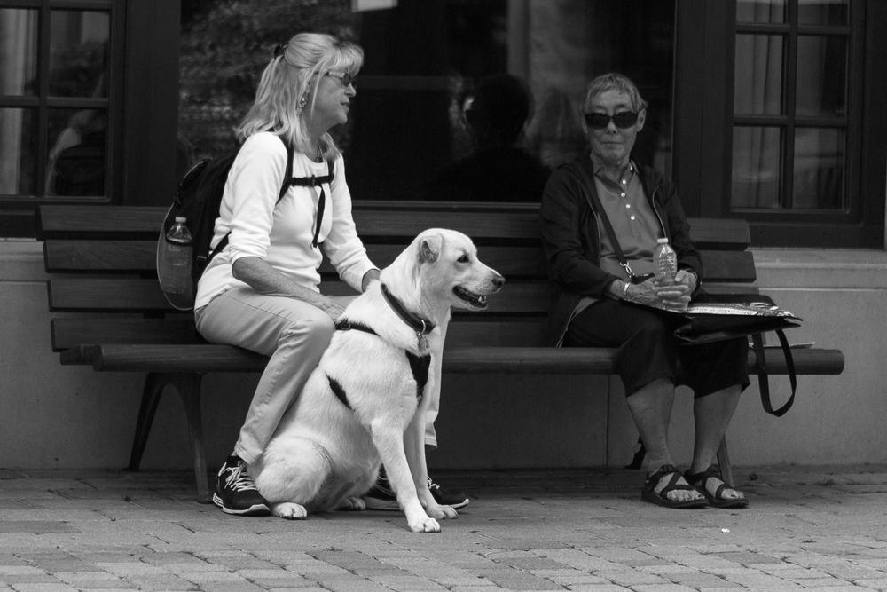 Sharing Dog Stories