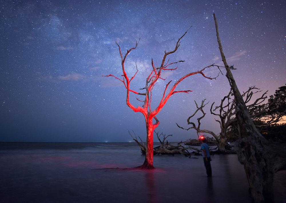 Jekyll-Red-Tree.jpg