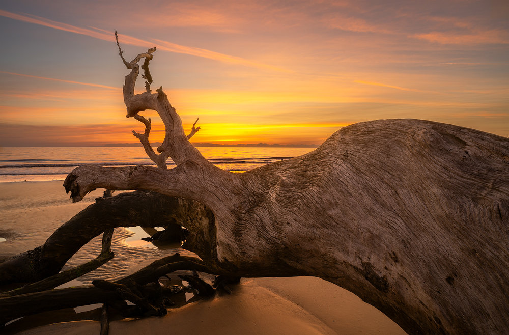 Same driftwood as the Jekyll Island picture on the right but two years later.