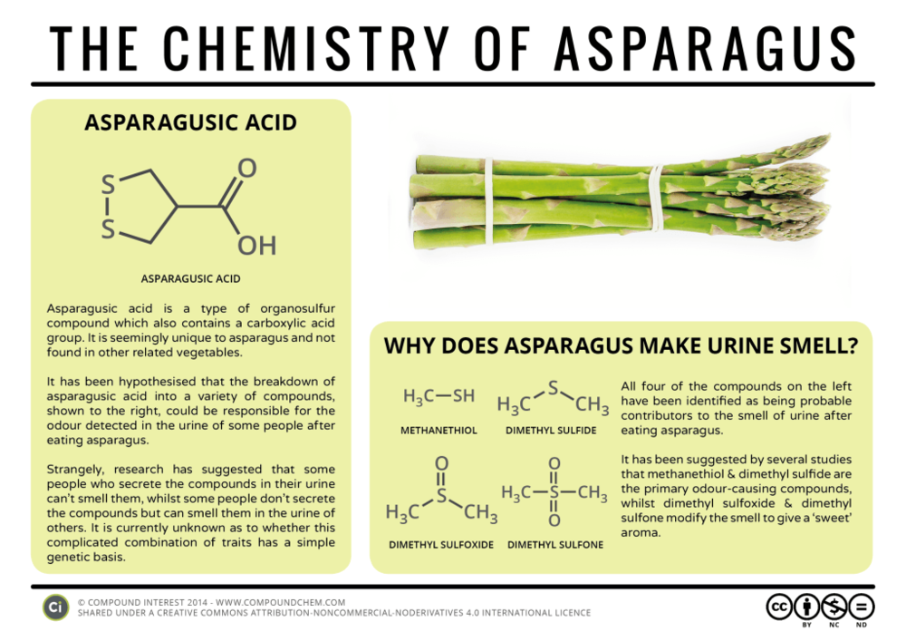 Food-Chemistry-The-Chemistry-of-Asparagus-1024x724.png
