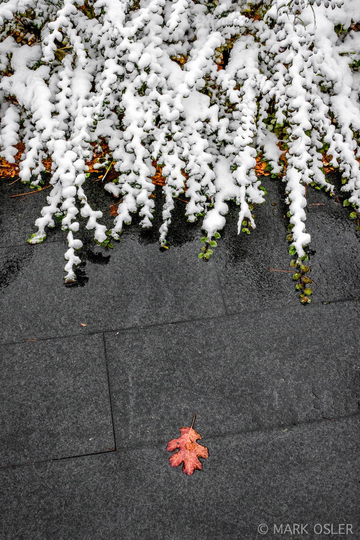 SnowAM-CivicCtr-17Nov2015-MTO0149_.jpg