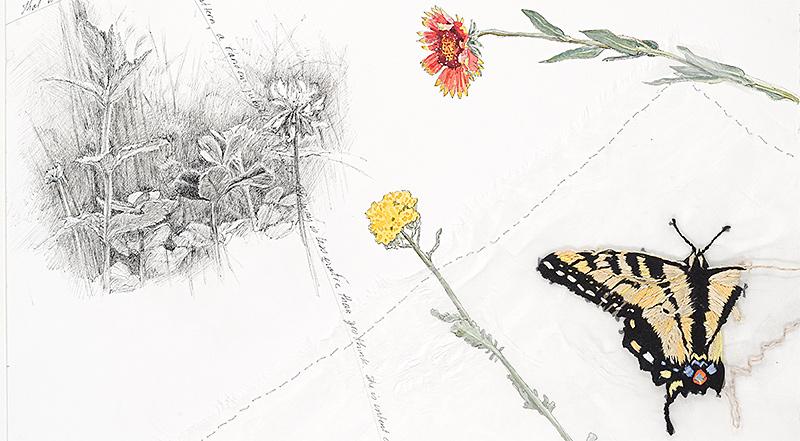 Susan-Guevara-Swallowtail-header.jpg