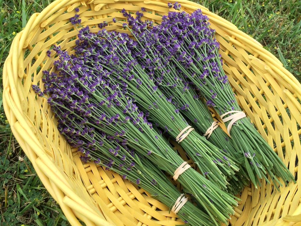 ohio-lavender
