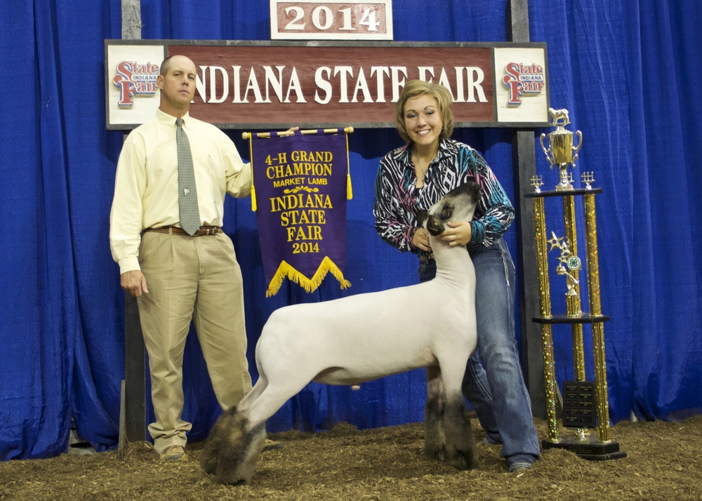 Grand Champion - 2014 Indiana State Fair Sire:  GrizzDam:  WH 2-060 (WH 8-075 line)Showman:  Raute FamilyPlaced by:  Hill Show Stock