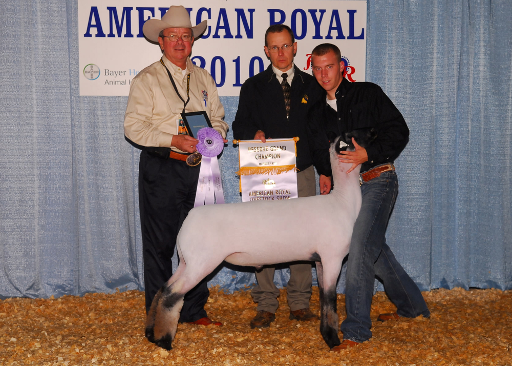 Reserve Grand - 2010 American Royal  Sire:  UntouchableDam:  WH 8-013Showman:  Amburgey FamilyPlaced by: Hill Show Stock