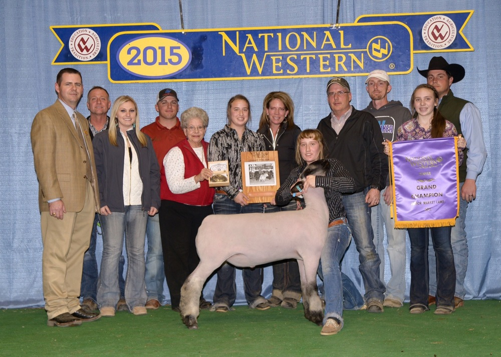 Grand Champion - 2015 National Western Stock Show Sire:  CenterfoldShowman:  Jenna FinkBreeder:  Maclennan Club Lambs