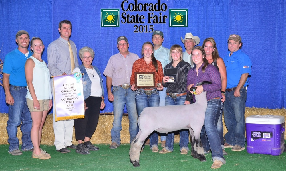 Reserve Grand - 2015 Colorado State Fair Sire:  CenterfoldBreeder:  Maclennan Club Lambs