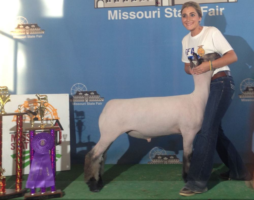 Reserve Grand - 2015 Missouri State Fair Sire:  BIg Papi (WH 4-033)Dam:  True Blood daughterBreeder:  Amstutz Club Lambs
