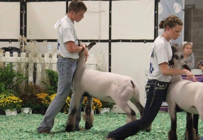 Class 12 winner - 2016 american royal Sired by:  Barely Legal   Shown by:  Skidgel Family  Placed by:  Ty Allen