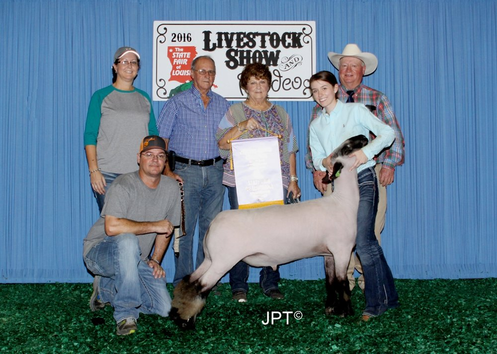 Reserve Grand - 2016 Louisiana State Fair Sire:  StonewallDam:  WH 4-114 (WH 8-075 daughter)Showman:  Goutierrez Family
