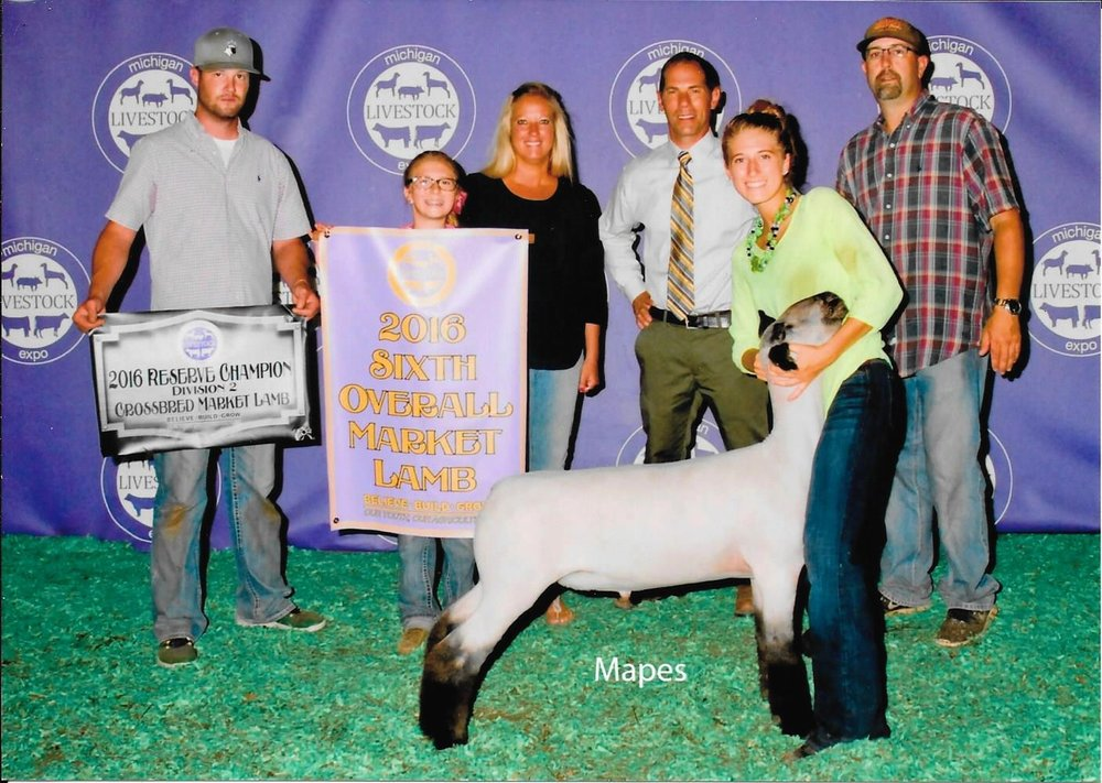 Reserve Grand Division II Cross - 2016 Michigan Livestock Expo Sire:  BoardwalkDam:  WH 4-113 (full sib to Barely Legal)Showman:  Maddy Stewartlaced by:  Hill Show Stock