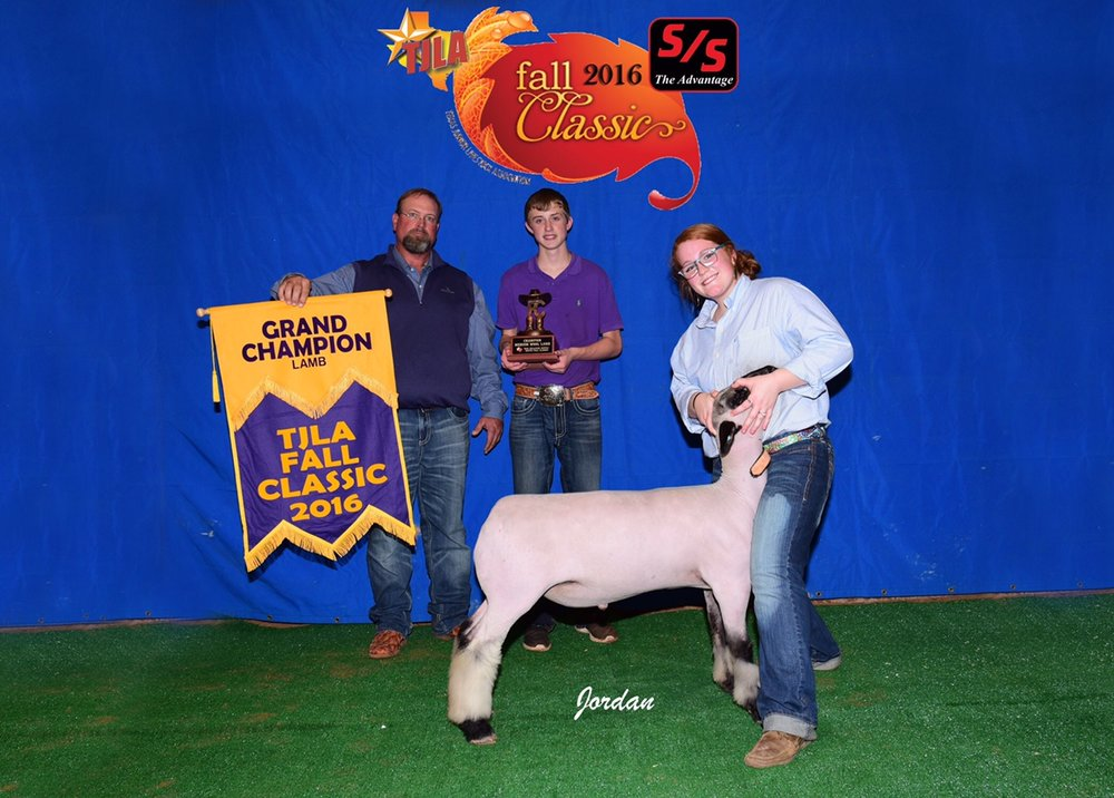Grand Champion - 2016 TJLA Fall Classic Sire:  CenterfoldBreeder:  Maclennan Club Lambs