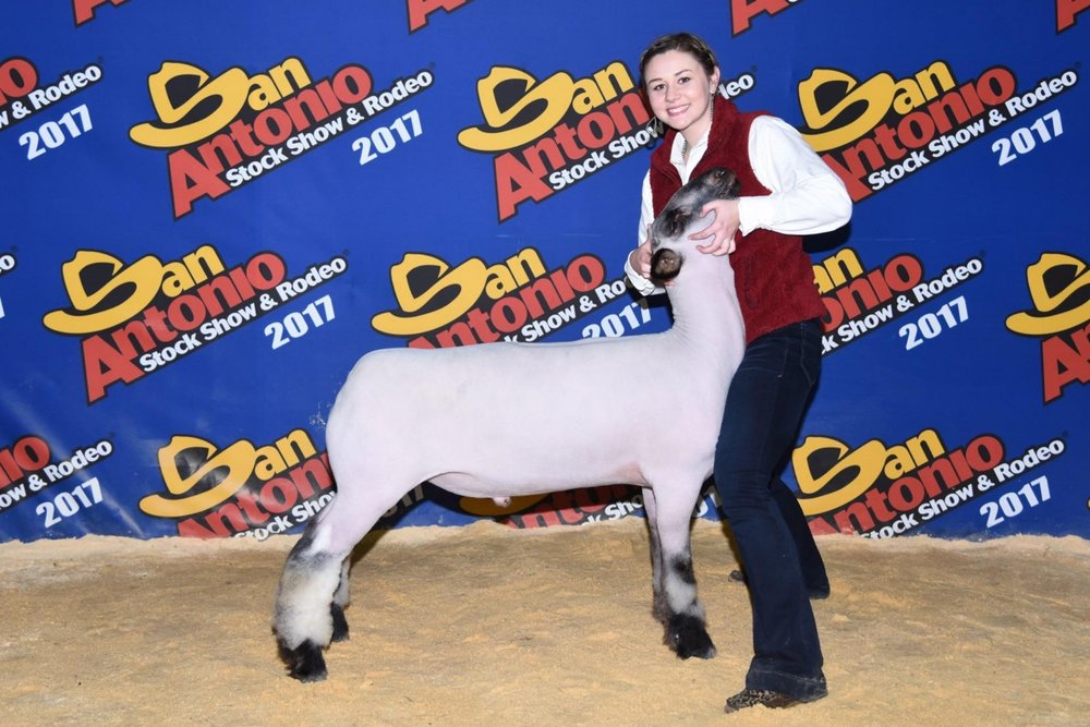 Class Winner - 2017 San Antonio Livestock Show  Sire:  CenterfoldDam:  WH-5-123 (WH 8-075 daughter)Showman:  Northcut FamilyPlaced by:  Hill Show Stock