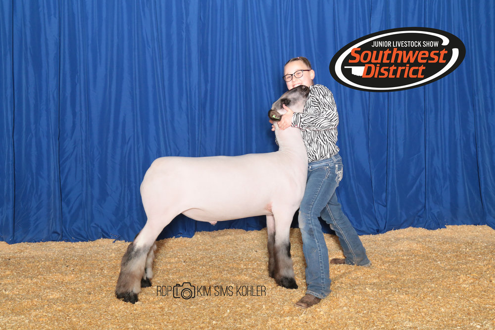 Bronze Shrop - 2017 Southwest District Livestock Show Sire:  Barely LegalDam:  WH 3-067Showman:  Ashlyn Maddox