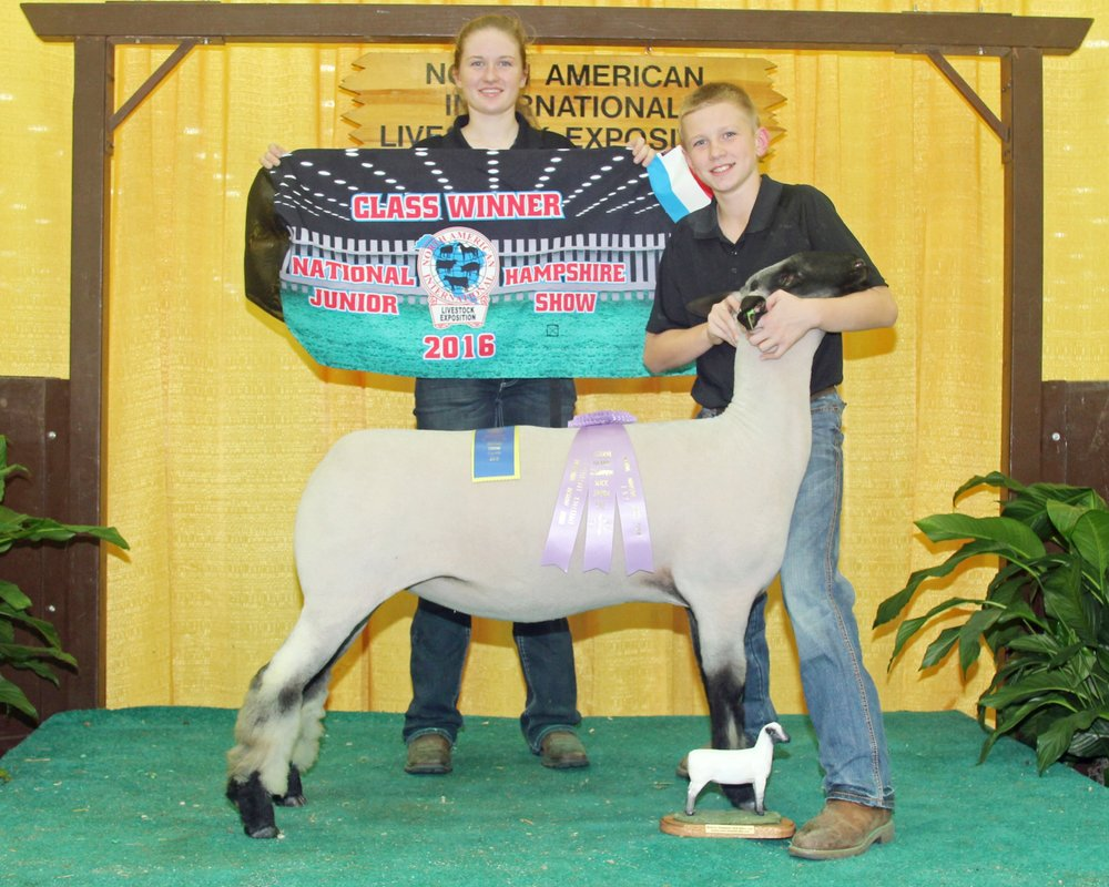 Reserve Grand Hampshire Ewe - 2016 NAILE Sire:  CenterfoldDam:  Shroyer 1130Showman:  Connolly Family