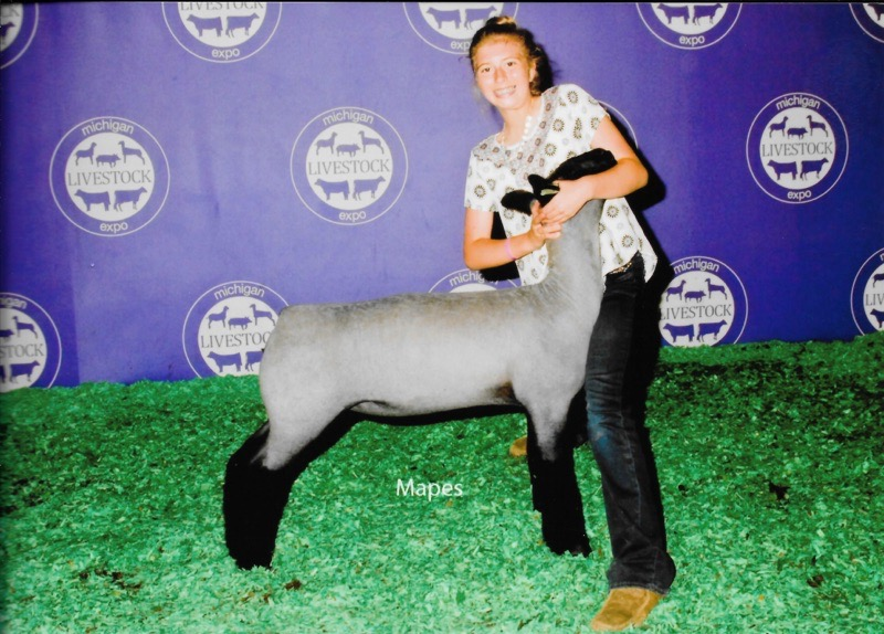 Champion Michigan Bred  - 2017 Michigan Livestock Expo Sire:  Ali (Barely Legal son)Dam:  Public Enemy daughterShowman:  Maddy StewartBreeder:  Gordeneer Club Lambs