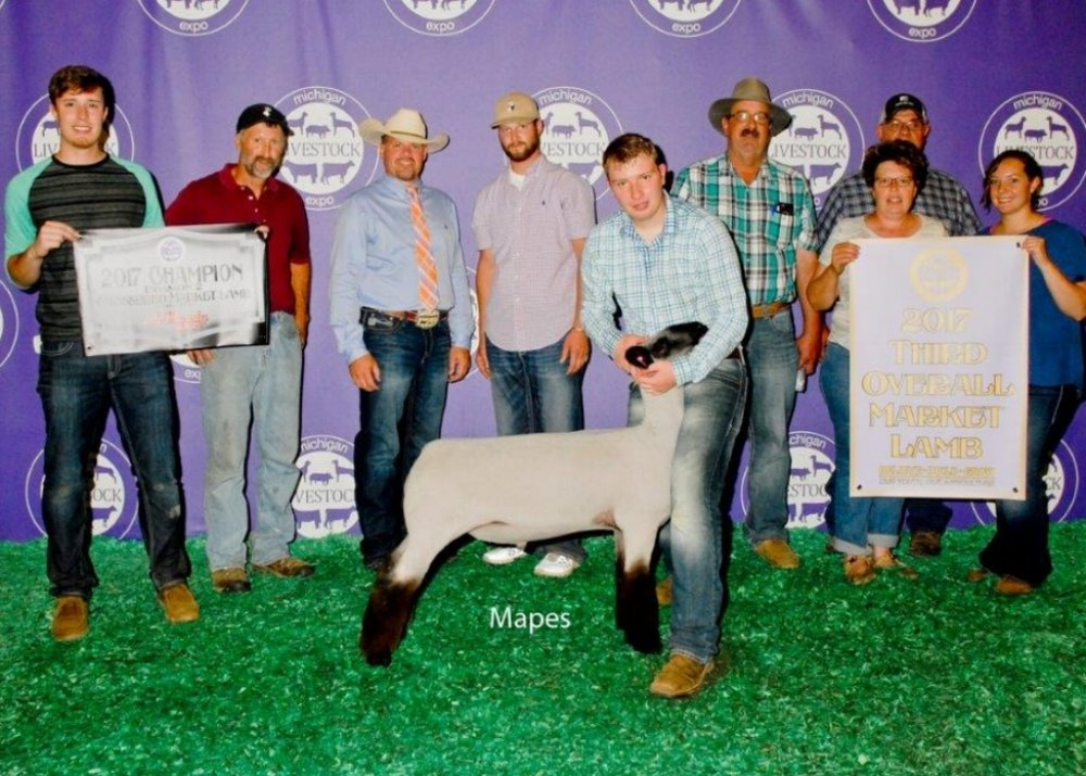 Division Grand & 3rd Overall - 2017 Michigan Livestock Expo Sire:  Ali (Barely Legal son)Dam:  Classic Touch daughterShowman:  Brad ChapmanBreeder:  Buckham Club Lambs