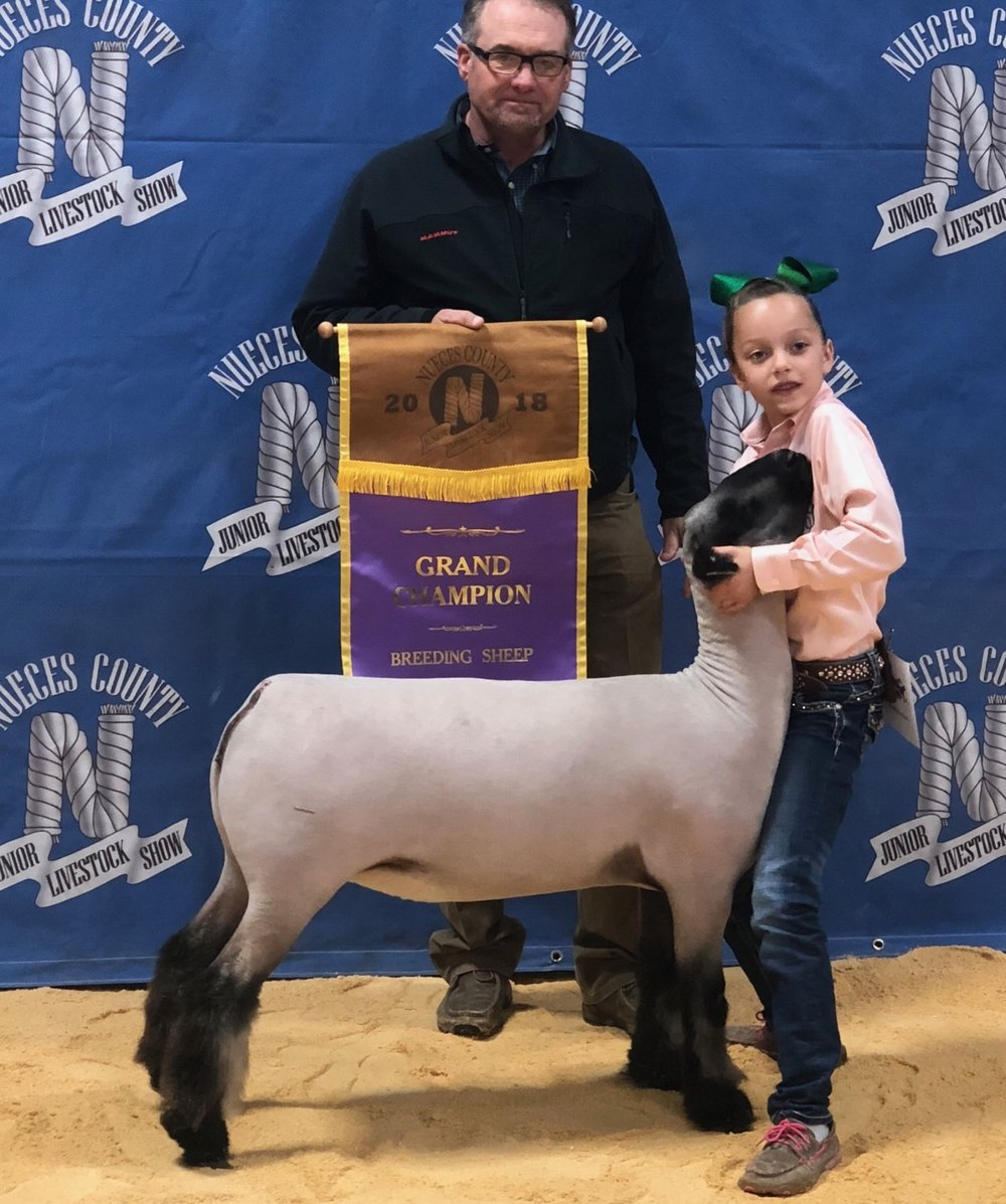 Grand Champion Breeding Ewe - 2017 Nueces County Texas Sire:  Ali (Barely Legal son)Dam:  WH 5-184 (WH 8-075 line)