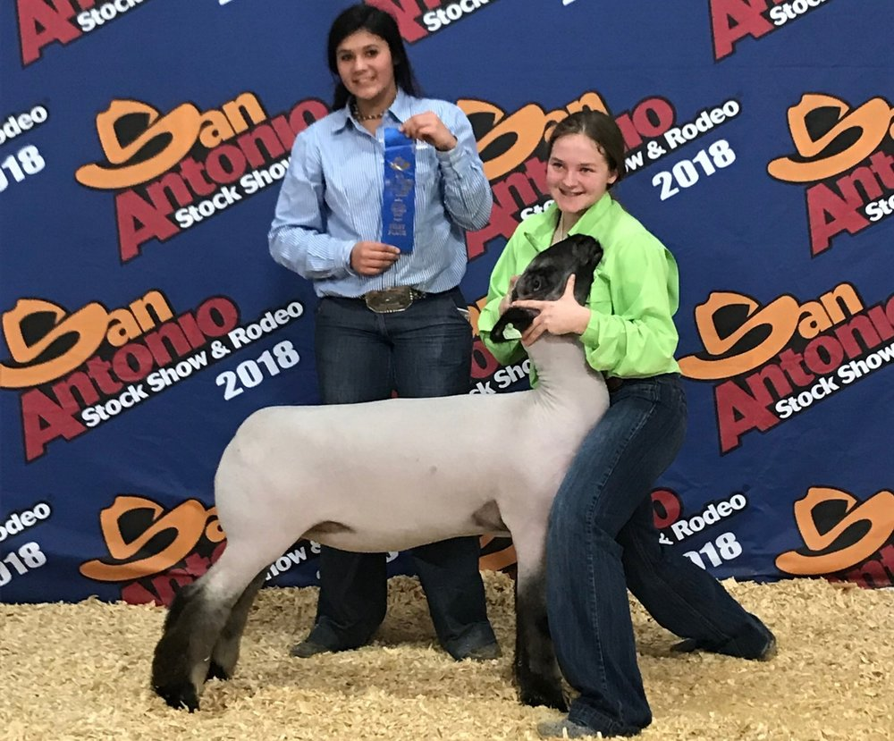 Class Winner - 2018 San Antonio Livestock Show Sire: Ali (Barely Legal son)Dam:  WH 4-042Showman:  Montana Hicks