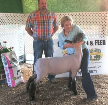 Grand Champion - 2017 Lucus County (IN) Sire:  Blood Line (WH 8-075 son)Breeder:  Beck Club Lambs