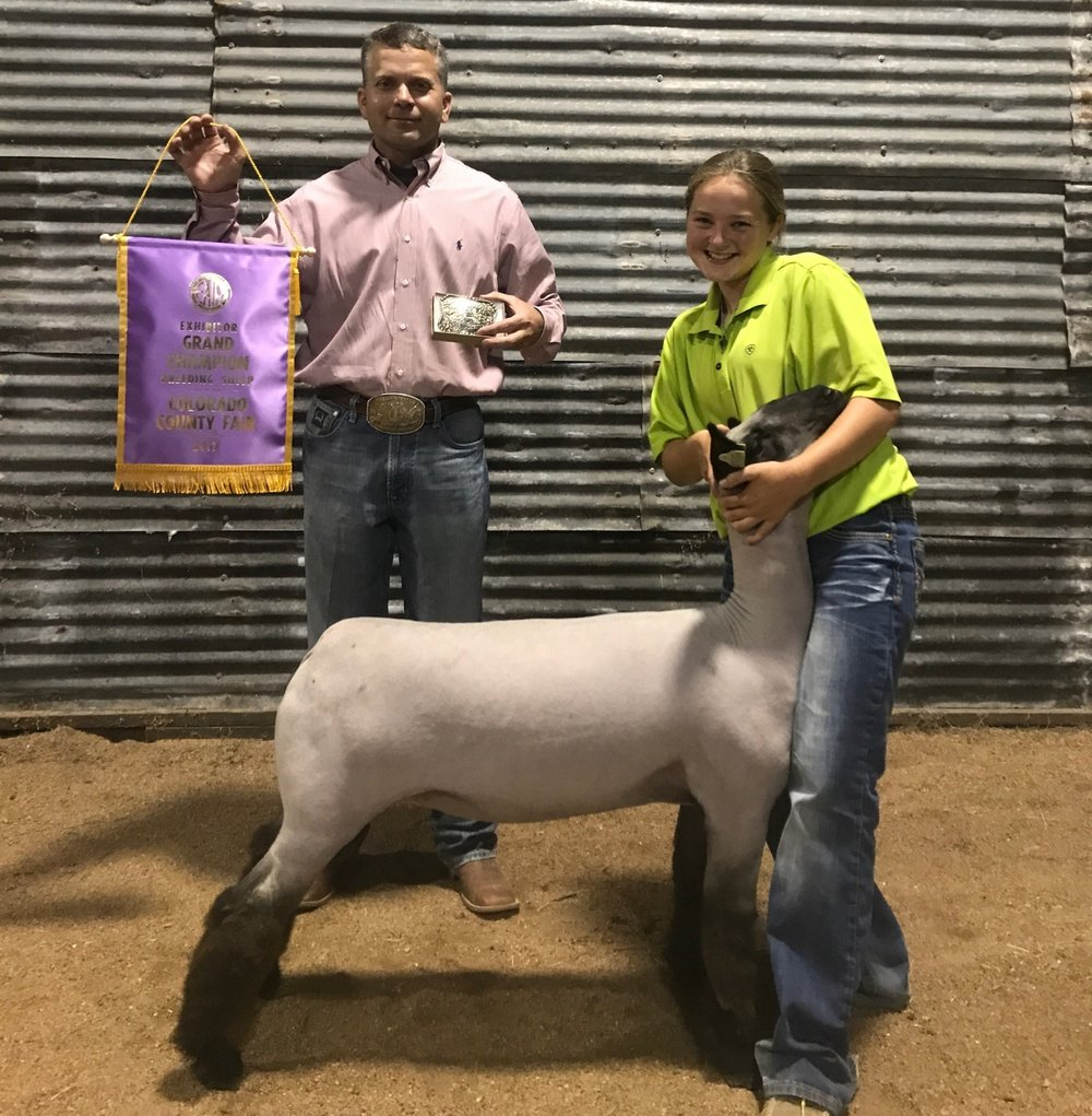 Grand Champion  - 2017 Colorado County Fair Sire: Ali (Barely Legal son)Dam:  WH 4-042Showman:  Montana Hicks