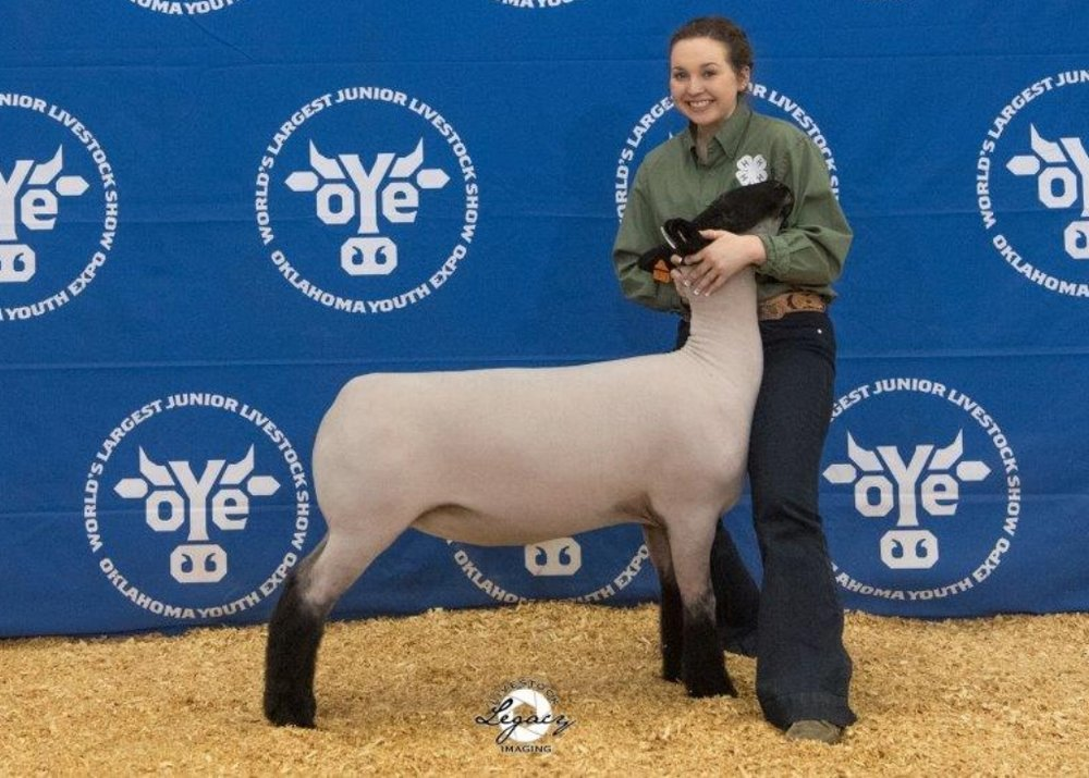 Res. Suffolk - 2018 Oklahoma Youth Expo  Sire: Bloodline (Barely Legal son)Breeder:  Beck Club Lambs